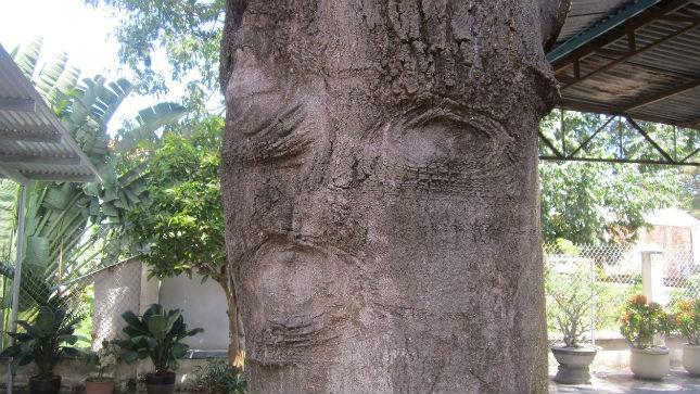 """Vết lõm  """"hình mặt người"""" trên thân cây"""