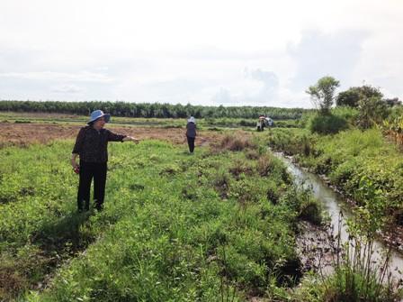 Bà Hoài Thu cho rằng Mai không thể chở nạn nhân bằng xe máy chạy dọc con mương nước này để đến vườn mít được vì hoàn toàn không có đường để đi.