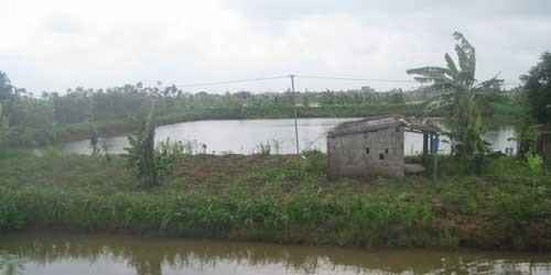 """Nam Định: Dự án """"ma"""" đẩy nông dân vào cảnh khốn cùng?"""