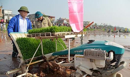 Bí thư Thành ủy Hà Nội Hoàng Trung Hải xuống đồng cấy lúa.