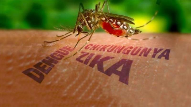 Chủ động phòng, chống dịch bệnh do vi rút Zika