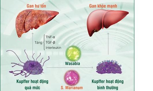 Phát hiện mới về nguyên nhân gây ung thư gan từ thực phẩm bẩn