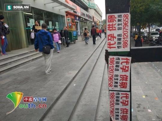 Thông tin quảng cáo bán trứng, tặng trứng, đẻ thuê... xuất hiện đầy trên đường phố Bắc Kinh.