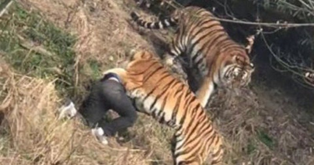 Vợ con đau xót khi chứng kiến chồng bị hổ vồ chết trong công viên