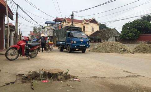 Lại thêm một đợt 'thảm sát cây xanh' ở Hà Nội