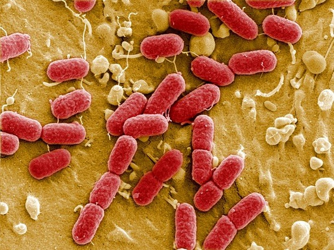 kháng sinh, kháng kháng sinh, kháng thuốc