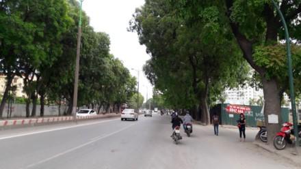 Dịch chuyển, chặt hạ 1.300 cây xanh trên đường Phạm Văn Đồng: Mới chỉ là đề xuất