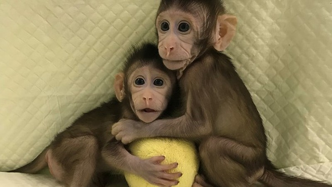 Hai chú khỉ Hua Hua và Zhong Zhong. (Nguồn: Reuters)