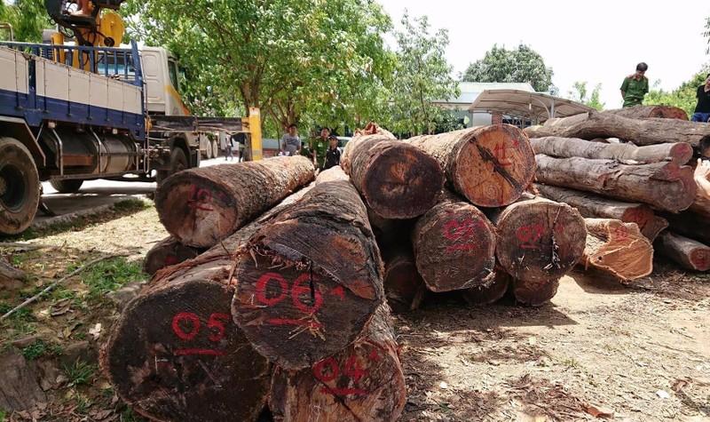 """Số lượng gỗ của trùm Phượng """"râu"""" bị cơ quan chức năng bắt giữ."""