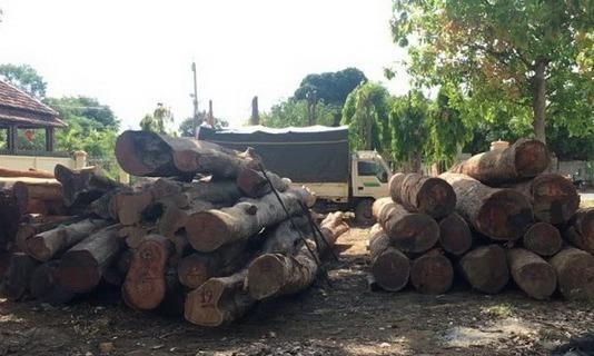 Tang vật vụ án liên quan đến trùm gỗ lậu Phượng 'râu'