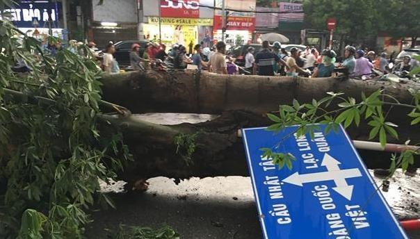Cơn giông giật đổ nhiều cây trên phố Hà Nội, một người tử vong
