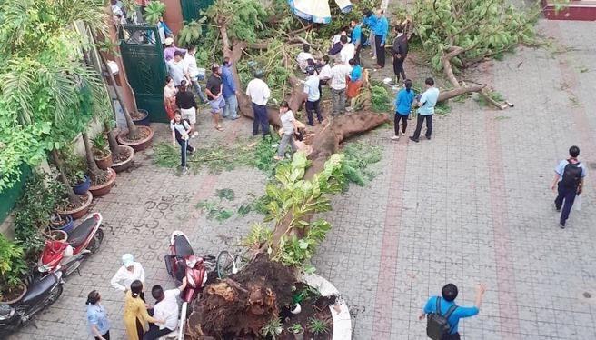 Khám nghiệm hiện trường vụ cây phượng đổ trong sân trường làm học sinh tử vong
