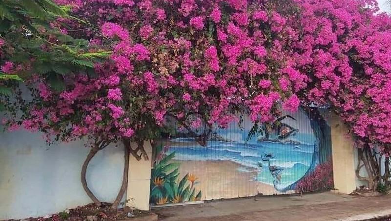 Bắt được nghi phạm cưa trộm cây hoa giấy tại Vũng Tàu