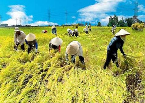 Lĩnh vực nông nghiệp thu hút nhiều dự án ODA mà BQL các dự án nông nghiệp đang triển khai