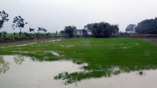 Khu đất thầu bị phá hợp đồng trước thời hạn
