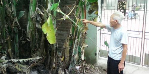Gia đình ông Lưu Văn Thế tự ý trồng cây trên phần đất vốn là ngõ đi chung
