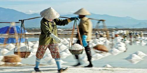 Với giá muối như hiện nay, diêm dân phải bán 30 cân muối mới đủ tiền mua 1 cân gạo phẩm cấp thấp