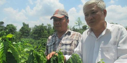 Bí thư, Trưởng ấp Đồi Rìu Hai Kiên (bên phải) thăm vườn cà phê của nông dân chuyển đổi từ cây điều vào năm 2013