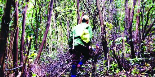 Đỉnh Hoành Sơn cách đây 20 năm, kín đặc dấu chân của các phu trầm