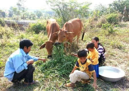 Các hộ gia đình từ Nam ra Bắc thoát nghèo nhờ nuôi bò