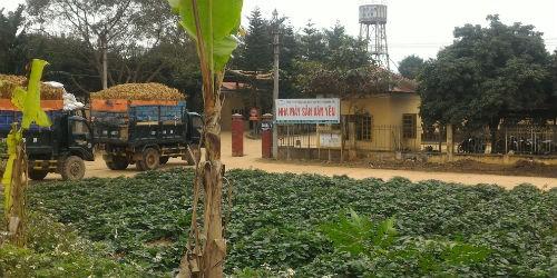 Nhà máy sắn Văn Yên hoạt động ngày đêm ảnh hưởng không nhỏ đến môi trường xung quanh