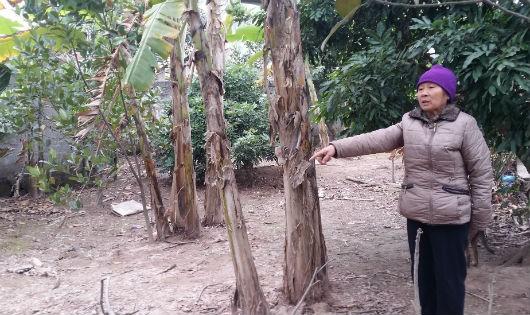 Bà Trần Thị Nụ bên diện tích đất mà gia đình không được chuyển đổi