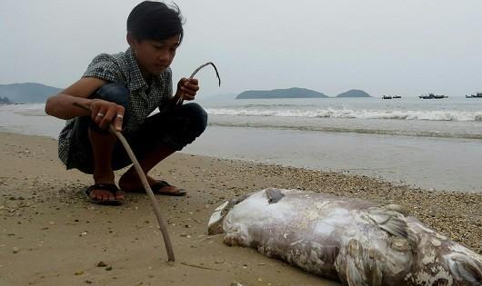 Sắp trình Chính phủ chính sách hỗ trợ ngư dân bị sự cố môi trường biển