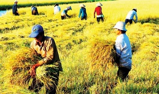 Lần đầu tiên ngành Nông nghiệp không tăng trưởng trong 6 tháng