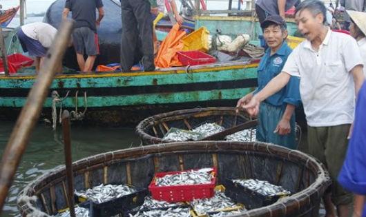 Tìm sinh kế cho ngư dân bị ảnh hưởng sự cố Formosa