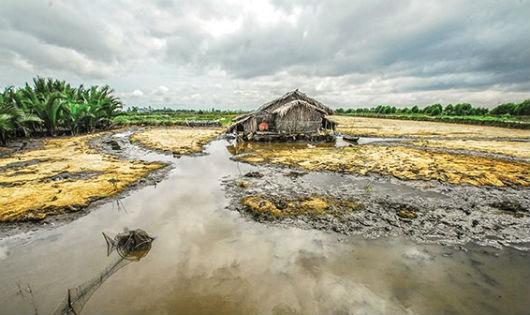 Nhiều bất cập trong việc hỗ trợ khắc phục hạn mặn ở Kiên Giang