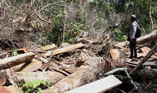 Lâm Đồng: Thấy gì qua hoạt động của Quỹ Bảo vệ và Phát triển rừng?