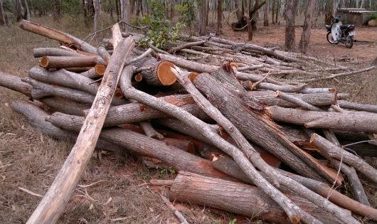 """Bình Thuận: Khắc phục hậu quả bão lụt lại bị buộc tội """"phá rừng""""?"""