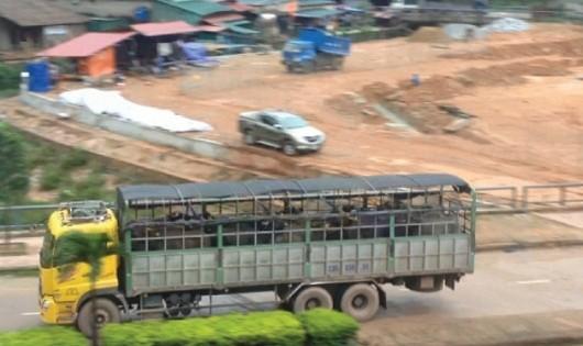 Ngày 27/7, có khoảng 15 chiếc xe chở trâu, bò như vậy qua cửa khẩu