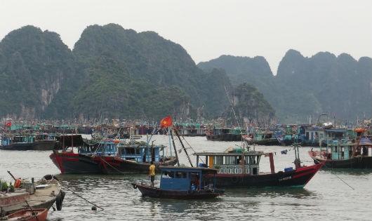 Các tàu bè vào khu vực gần núi Bài Thơ (TP.Hạ Long) để tránh trú cơn bão số 3