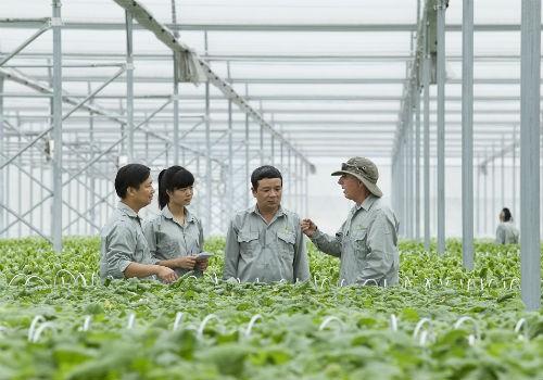 Các cán bộ sẽ được VinEco cử đến hướng dẫn trực tiếp các hộ sản xuất tiếp cận với kỹ thuật và quy trình sản xuất nông nghiệp hiện đại