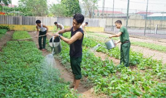 Cán bộ, nhân viên Ban CHQS thành phố Phủ Lý chăm sóc rau xanh tại khu TGSX tập trung của đơn vị