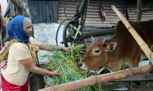 """""""Có vốn để nuôi bò, không còn nghèo nữa"""""""