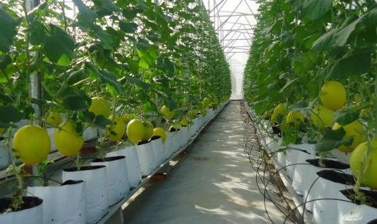 Nhật Bản đầu tư vào nông nghiệp Việt Nam