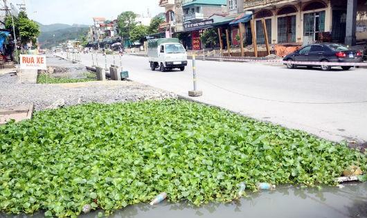 TP Cẩm Phả, Quảng Ninh: Cần xem xét lại việc bồi thường cho 41 hộ dân