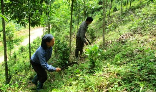 Nhiều ý kiến đề nghị cần mạnh dạn giao rừng cho dân