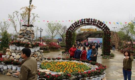 Chiêm ngưỡng hàng ngàn cây đỗ quyên tại Fansipan Legend