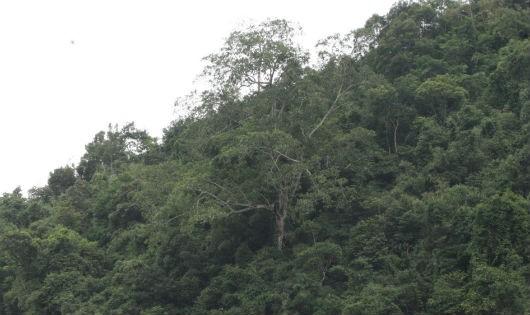 Dự án đường giao thông Ba Chẽ - Hạ Long: Nguy cơ mất hàng chục hécta rừng và ô nhiễm nguồn nước sinh hoạt