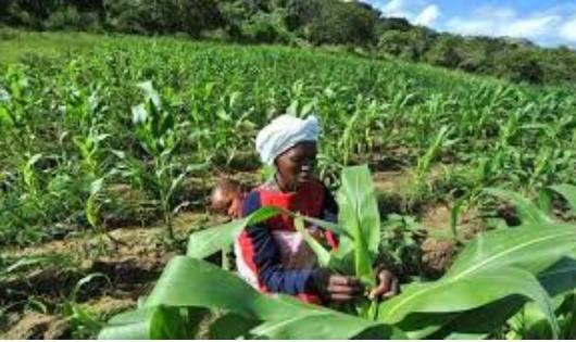 An ninh lương thực - Thách thức của châu Phi