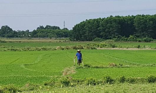 Dự án xây dựng cơ sở giết mổ gia súc, gia cầm ở Hương Trà: Bỏ qua người dân, phớt lờ pháp luật