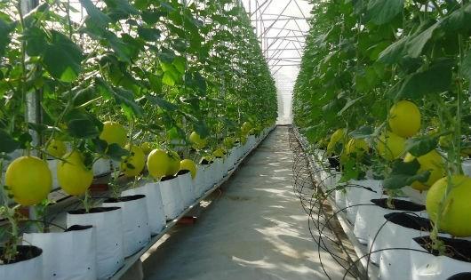 Nông nghiệp công nghệ cao: Bảy nút thắt cần tháo gỡ