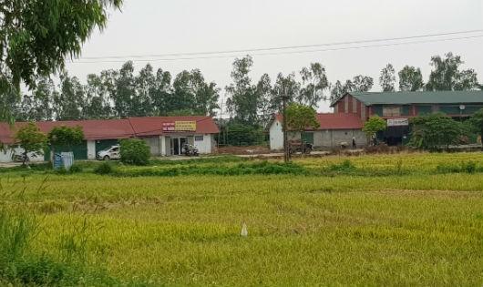 Thạch Thất (Hà Nội): Hàng nghìn mét vuông đất nông nghiệp bị chiếm dụng