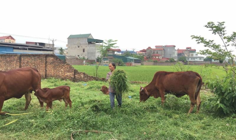 Ước mơ của một người mẹ nghèo ở Hà Nội