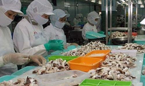 Xuất khẩu mực, bạch tuộc sang EU tăng mạnh