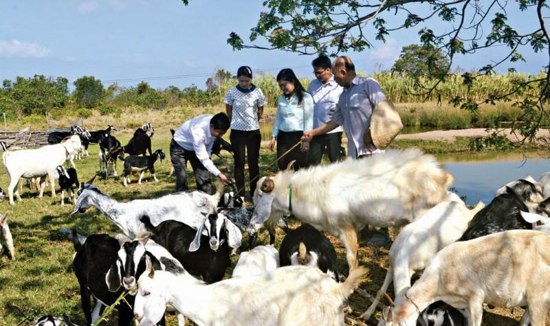 Người đồng hành của nông dân Cà Mau