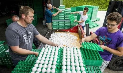 """EU sẽ xét xử vụ trứng """"bẩn"""" làm chao đảo châu Âu"""